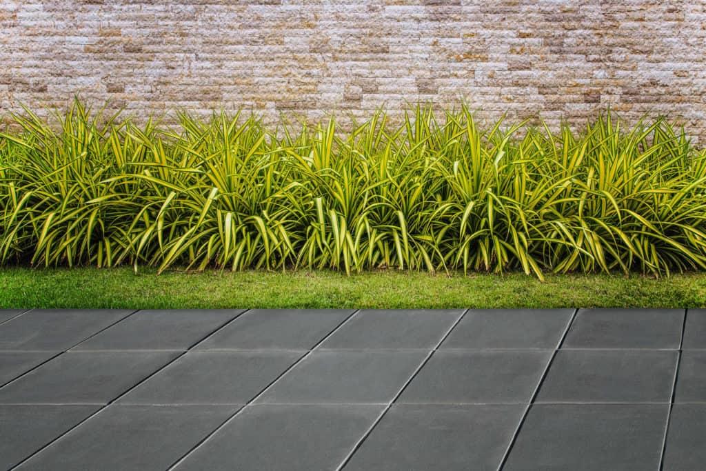 LISCE pavimento su piedini pavimento  su supporti regolabili pavimenti galeggianti pavimento in colla